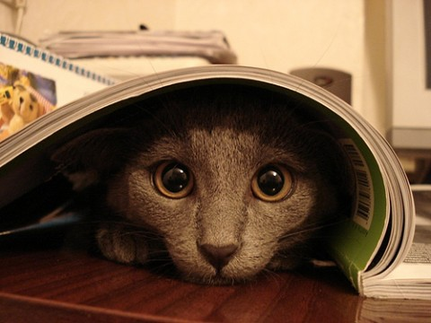 cat-hide-and-seek-17
