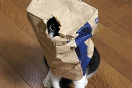 cat-hide-seek-12