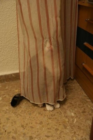 cat-hide-seek-2