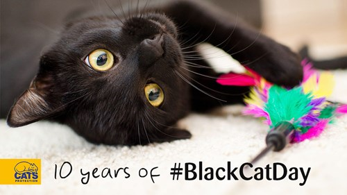 10-yearsblackcatday